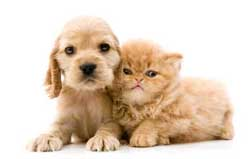 Dog lover? Cat lover? Join a pet club and meet other people passionate about animals!