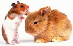 Pet clubs for exotic pets